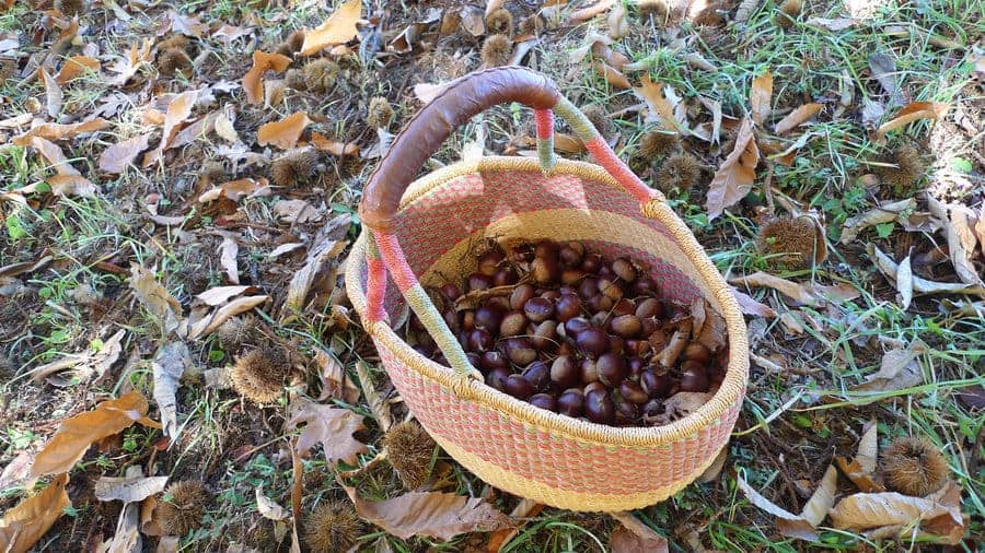 The Grow Season For Nut Trees In California