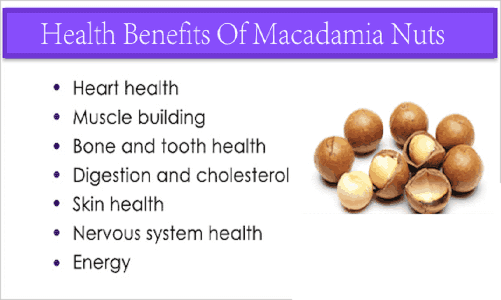 Health Benefits Of Macadamia Nuts, Nutritional Benefits Of Macadamia Nuts