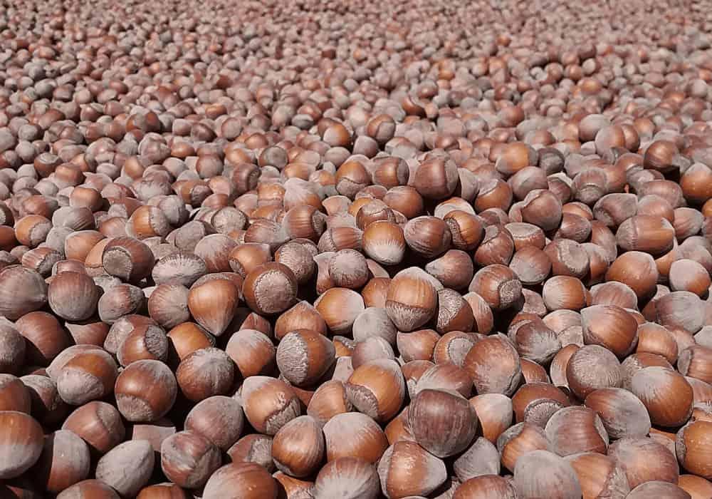 Hazelnut Harvest Nutella