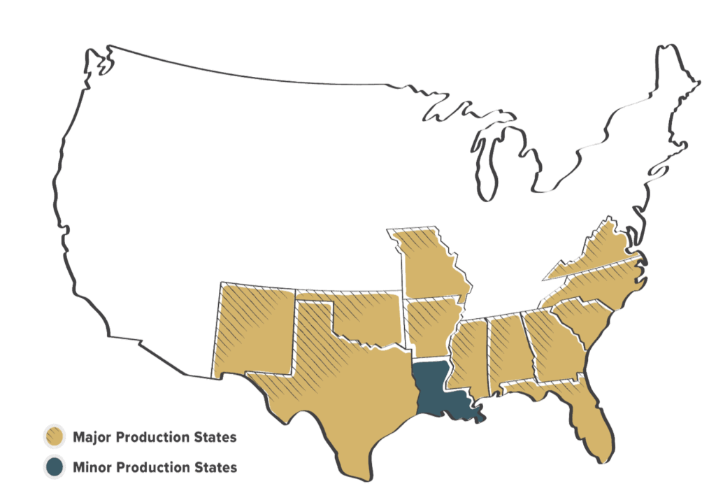 Where Peanuts Grow in America